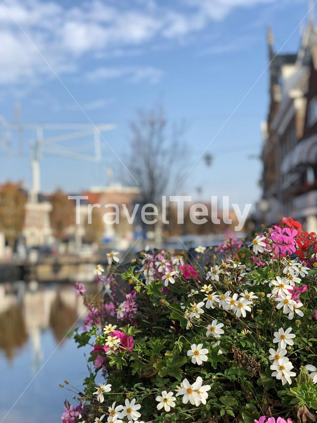 Flowers in Sneek during autumn, Friesland The Netherlands