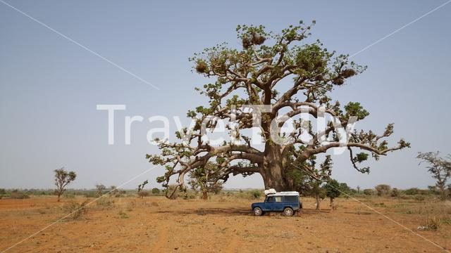 Car standing next to a baobab tree in Somone Lagoon Reserve in Senegal