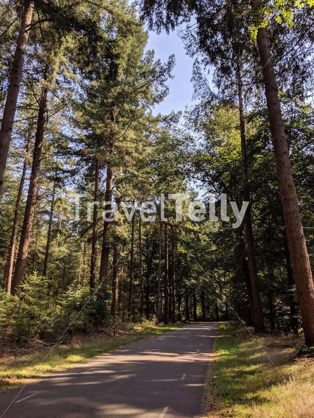Road through the forest of the Lemelerberg in Overijssel, The Netherlands