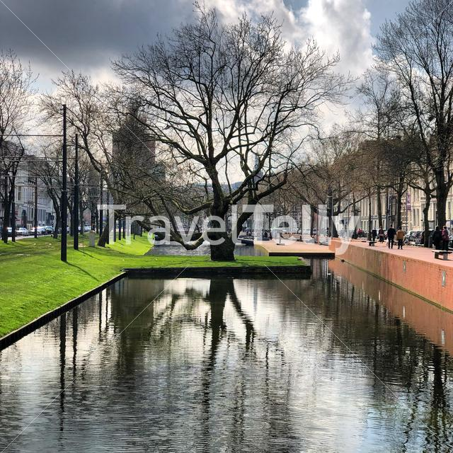 Tree in water, Rotterdam the Netherlands city center Eyespiration mindfulness moment.