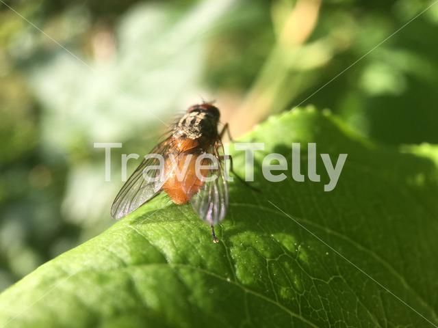 Macro from a fly his wings