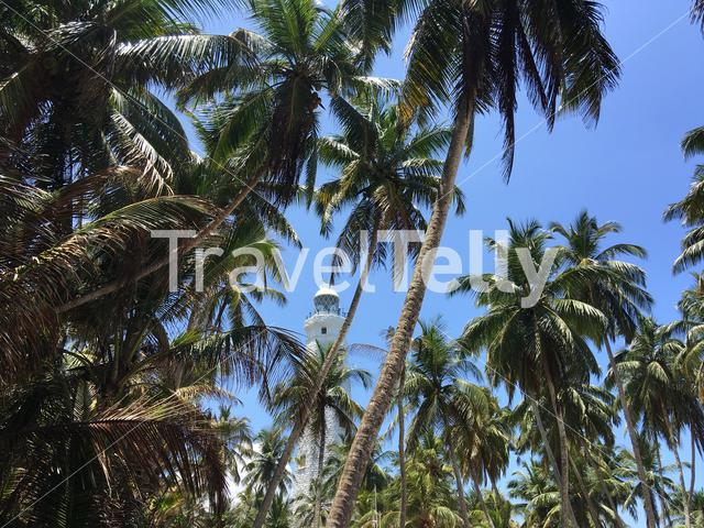 Dondra Head Lighthouse behind palmtrees near the southernmost point in Sri Lanka