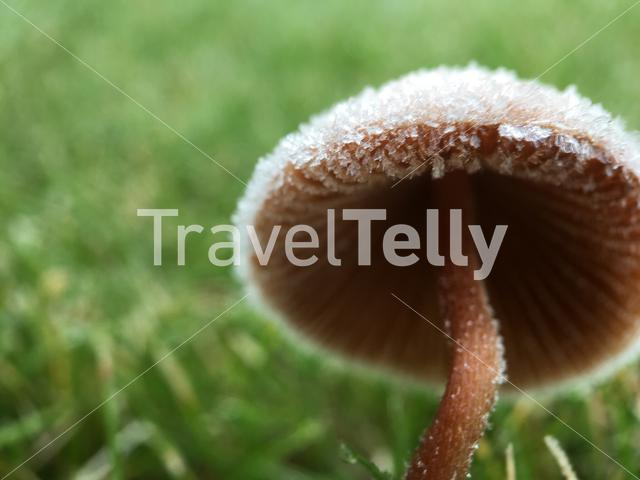 Ice on a mushroom in the The Netherlands
