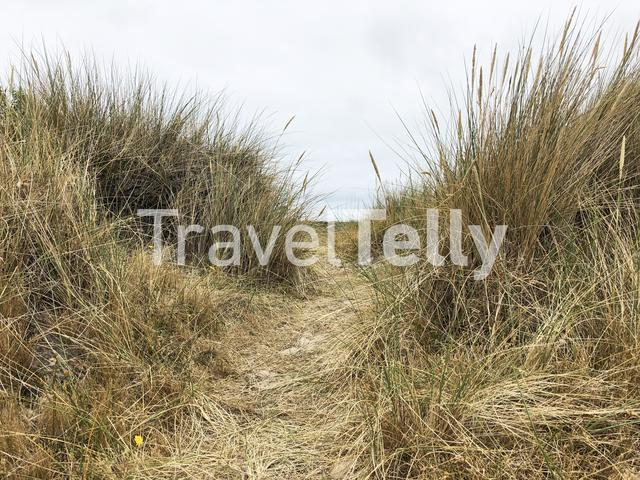 Dune on Terschelling, Friesland The Netherlands