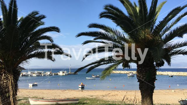 Palm trees in front of the harbour of Nea Fokea Greece