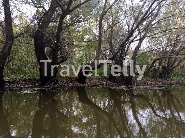 Tree reflection on a small river at the Danube Delta in Romania
