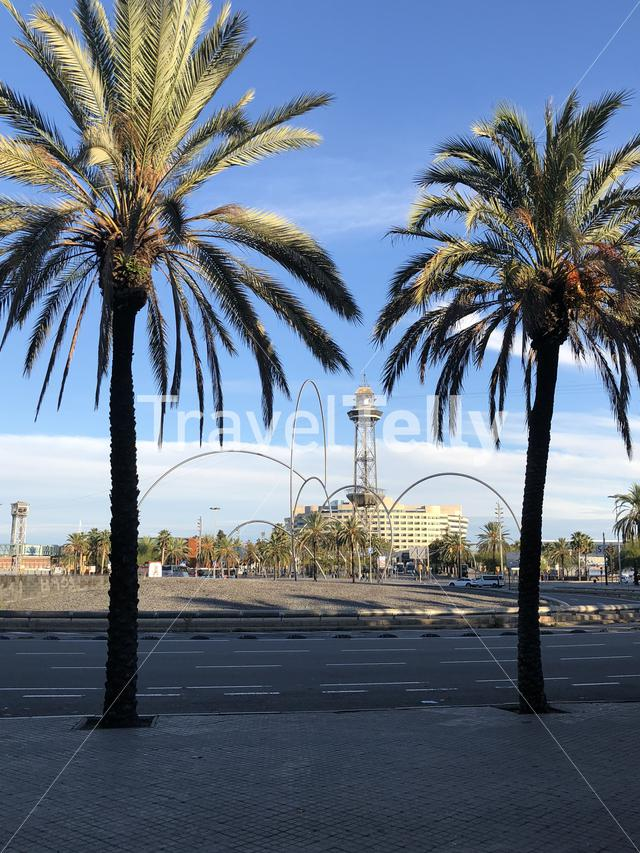 Palm trees at Plaza de les Drassanes roundabout in Barcelona Spain