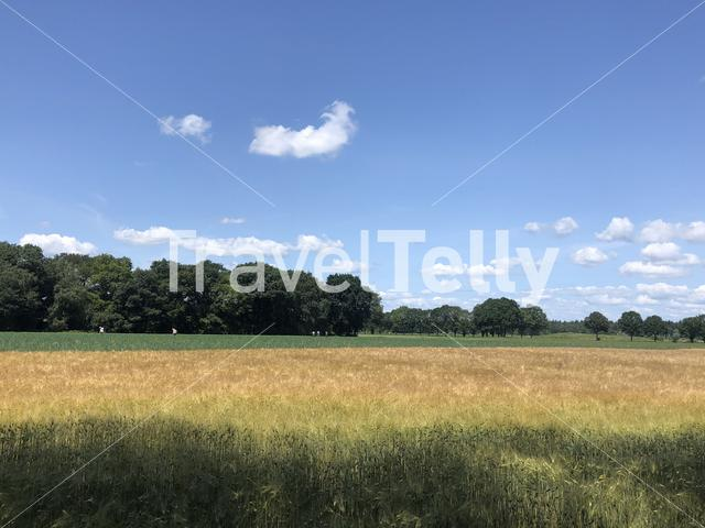 Farmland around Junne in Overijssel The Netherlands
