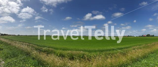 Meadow landscape panorama in Friesland, The Netherlands