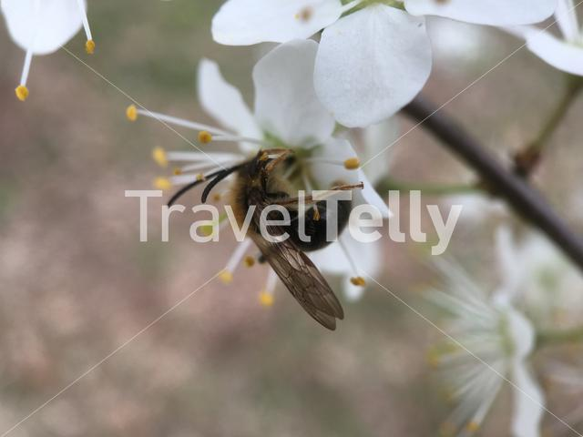 Bee eating nectar from a flower