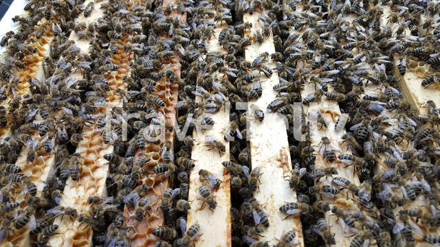 Dozens of Bees in a honeycomb