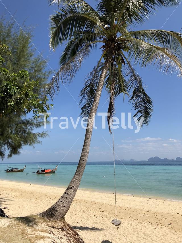 Swing on a palm tree at Koh Ngai in Thailand