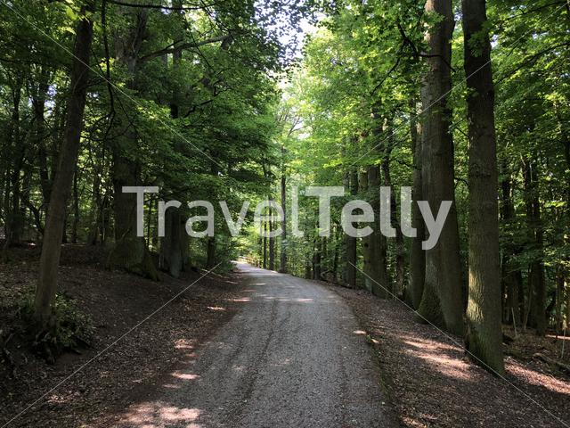Path through the forest around the Altenburg Castle in Bamberg Germany