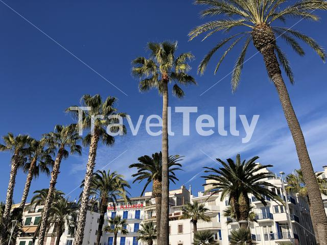 Palm trees in Sitges, Spain