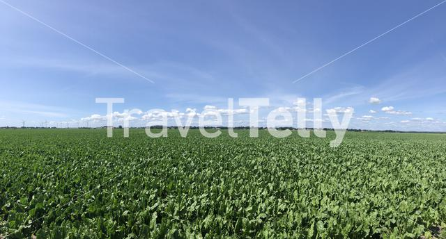 Farmland panorama around Rheezerveen in Overijssel The Netherlands