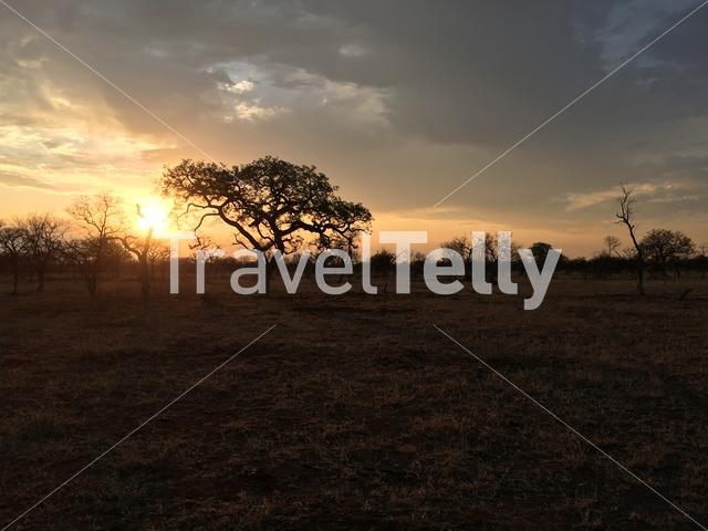 Savanna sunset landscape in Atherstone Nature Reserve South Africa