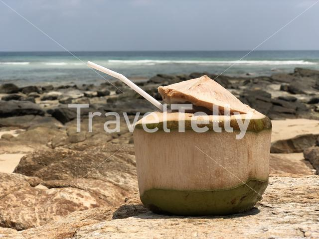Coconut on the rocks at Koh Samet, Thailand