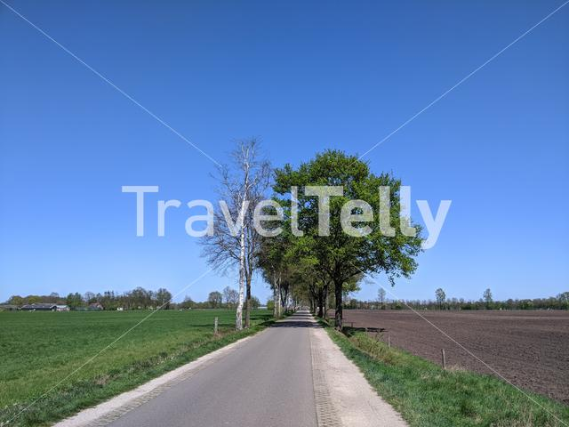 Road through farmland around Halle during spring in Gelderland, The Netherlands
