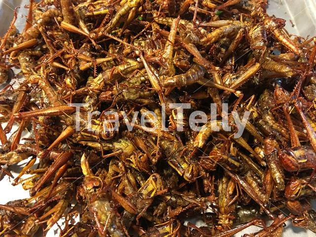 Fried grasshoppers at a market in Bangkok Thailand