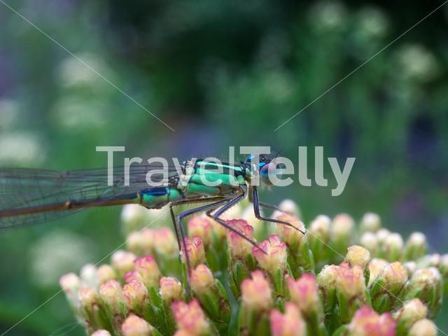 Dragonfly on a colourful plant