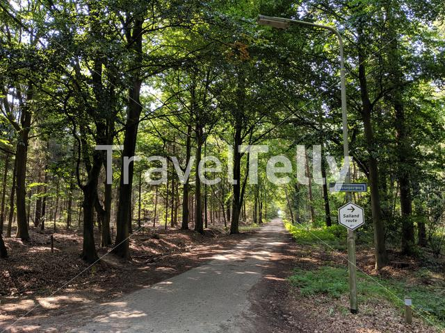 Cycle route 'Salland route' through the forest around Wesepe, Overijssel The Netherlands