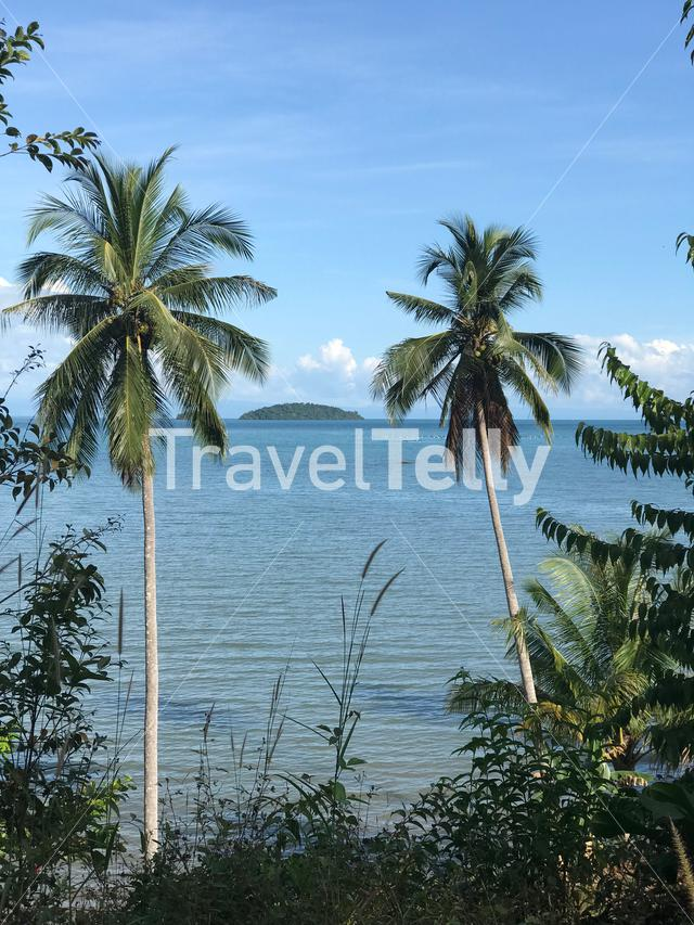Palmtrees at the coast of Koh Chang island in Thailand