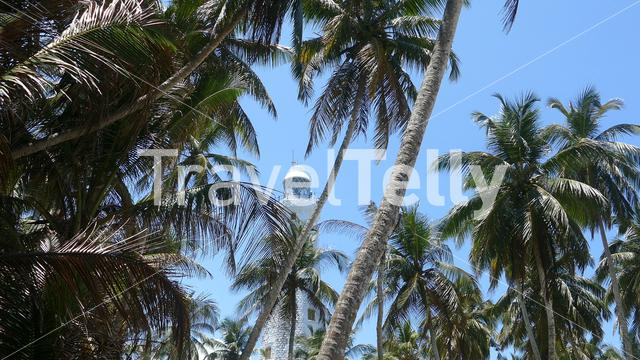 Dondra Head Lighthouse behind the palmtrees and near the southern most point in Sri Lanka