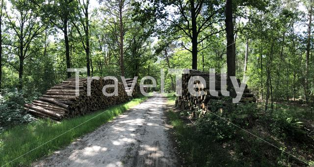 MTB route and forest around Ommen in Overijssel The Netherlands