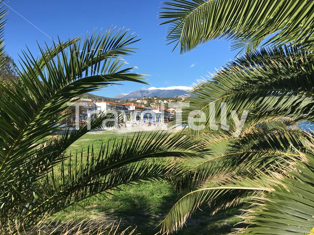 Palmtrees and hotels in Platamona Greece