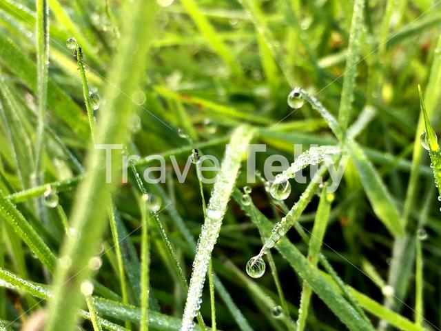 Water drops on grass in Ruinen Drenthe The Netherlands
