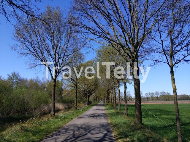 Road towards Veldhoek in Gelderland during spring, The Netherlands