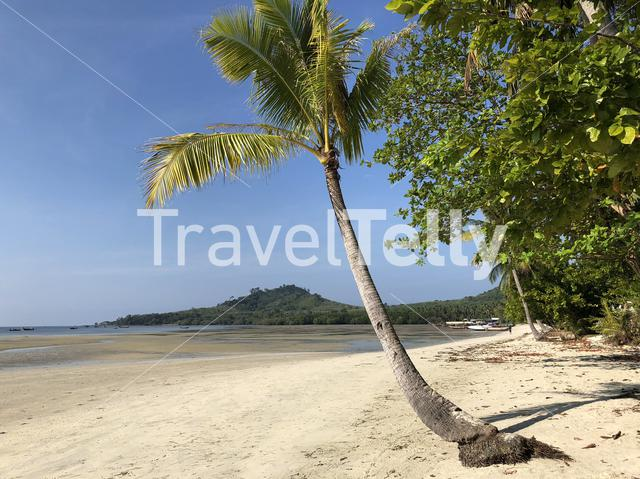 Palm tree on the beach at Koh Mook island Thailand