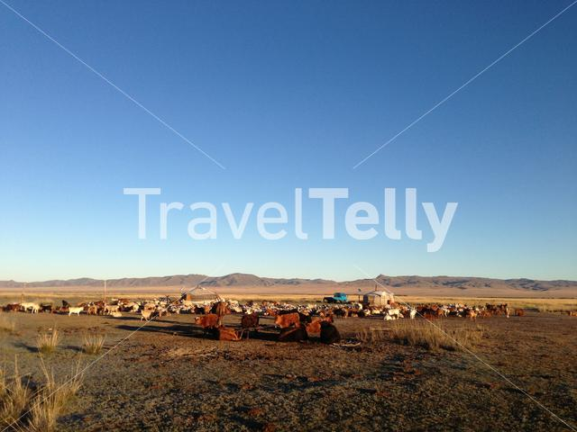 Two traditional yurts in Mongolia