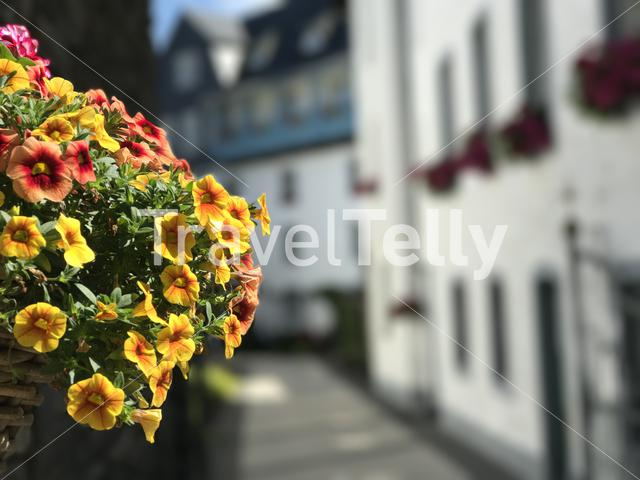 Flowers in Monschau Germany