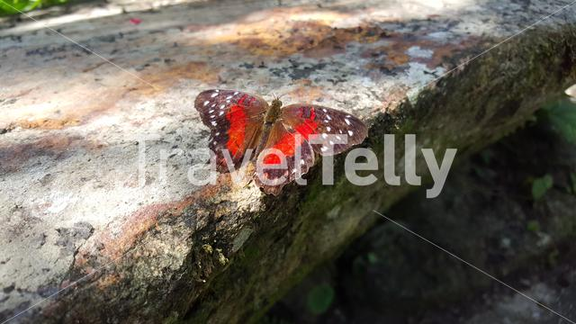 Butterfly in the forest in Suriname