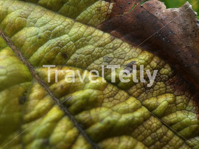 Macro shot from the structure of a leaf during Autumn