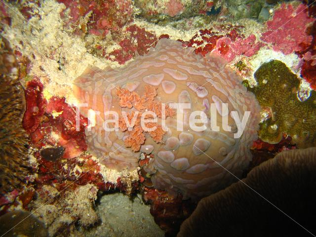 Nudibranche in Bunaken National Marine Park Indonesia