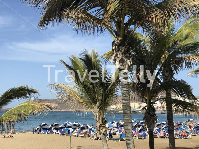 Palmtrees at Playa de Las Canteras in Las Palmas Gran Canaria