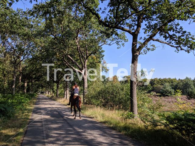 Horse riding in Friesland The Netherlands