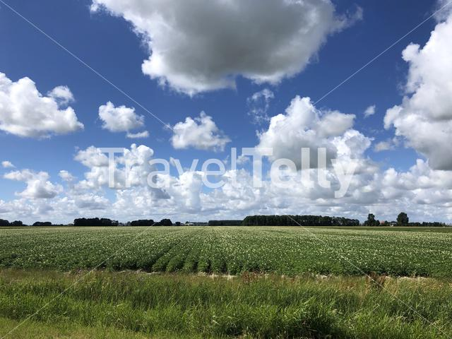 Farmland around Menaam in Friesland The Netherlands
