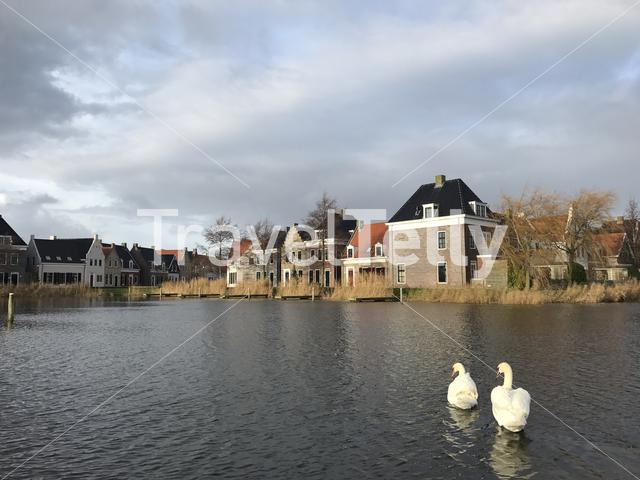 Old frisian houses and swans at Landal Esonstad in Oostmahorn Friesland The Netherlands