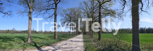 Road around Medler during spring in Gelderland, The Netherlands