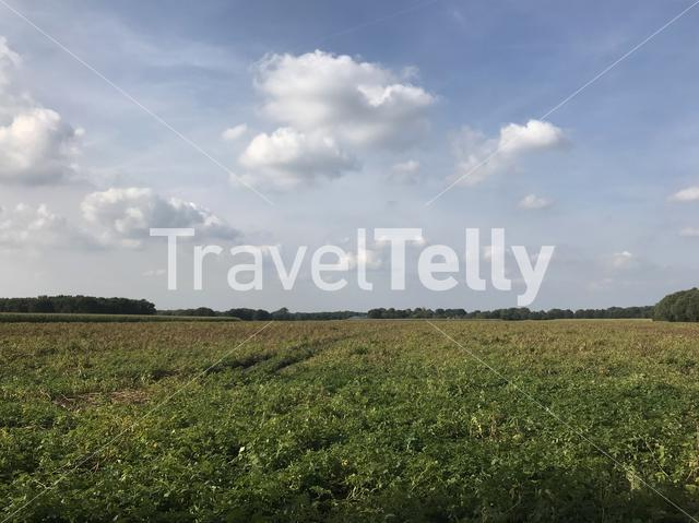 Farmland in Drenthe The Netherlands