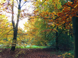 Autumn colors in the forest around Emmeloord The Netherlands