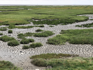 Dry ground during low tide on Terschelling, Friesland The Netherlands