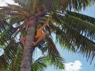 Guy grabing a coconut out of a the coconut tree
