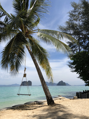 Swing at a palm tree on Koh Ngai in Thailand