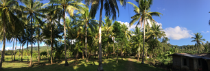 Farm land with palmtrees panorama at the countryside of Anda Bohol the Philippines