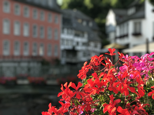 Red flower with in the background the Monumental house das Rotes Haus in Monschau Germany