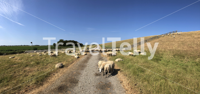 Panorama from sheeps next to a dike in the north of Friesland The Netherlands